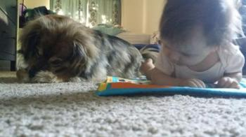 Another bonus, dogs also provide crawling lessons.